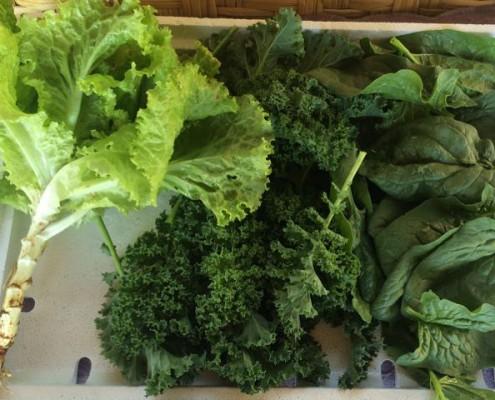 Gemüse für 1,40 €